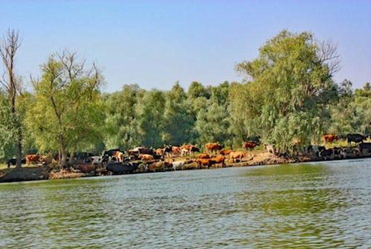 Danube Bucharest 5