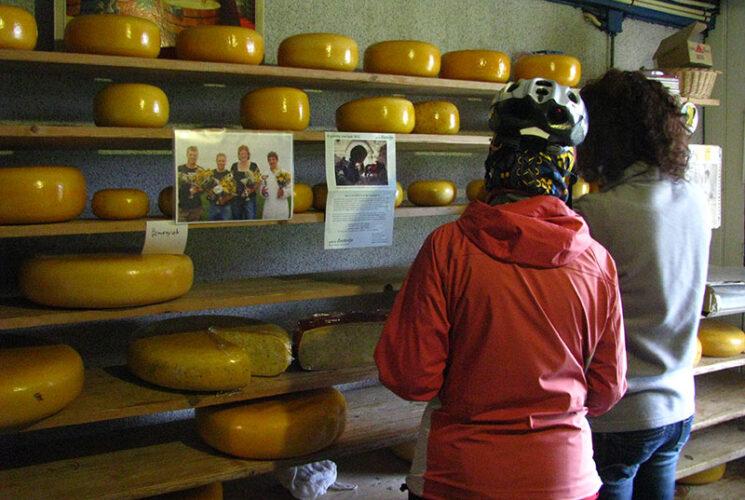 Tulip  Tour  Cheesefarm Visit